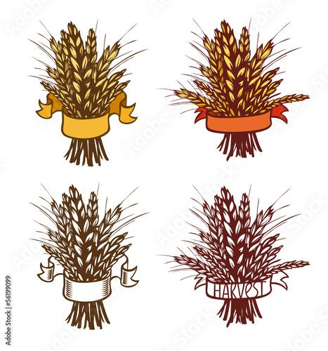 Rye, wheat