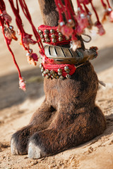 Decorated camel foot