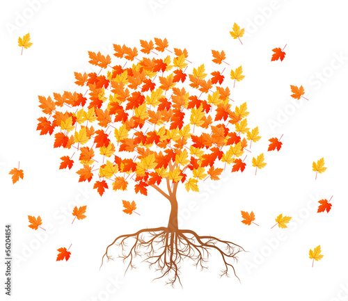 Maple tree autumn leaves background vector