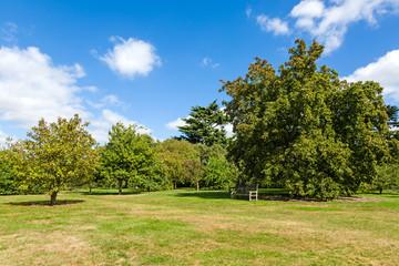 Lush Green Tranquil Woodland Garden in Sunshine