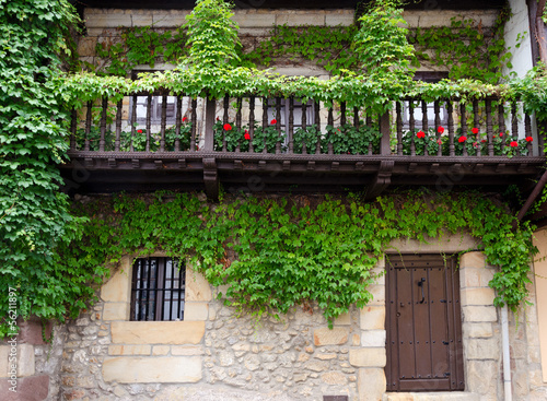 Ivy on the Facade