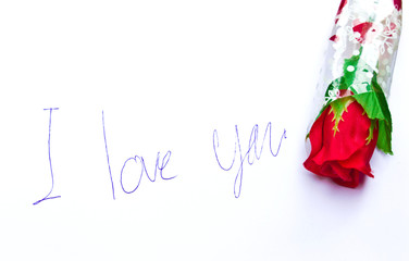 Red rose with I love you