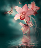 Fototapety Orchids with a butterfly on the coloured background