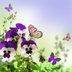 Blue spring violets on a green background