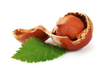 Hazel nuts and leaf