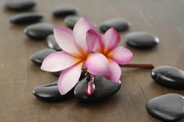 frangipani flower arranged on wooden board