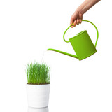 Fototapety watering green grass with a watering can, isolated on white