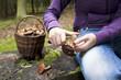 Women cleaning mushroom after Picking, Mushrooming
