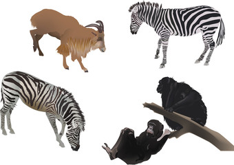 several color animals on white