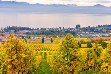 Vigne d'Autunno sul lago di Ginevra, Svizzera