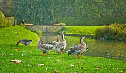 City park with birds
