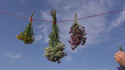 hanging fresh medical herbs bunch on red string