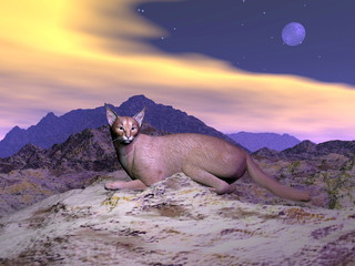 Caracal or desert lynx - 3D render
