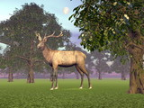 Elk in the woods - 3D render