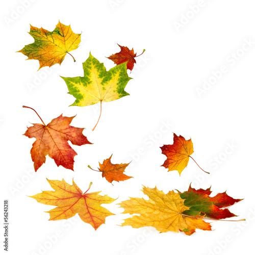 Foto op Plexiglas Bomen Fallende Herbstblätter auf weiß