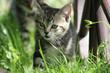 Getigertes Katzenbaby 2