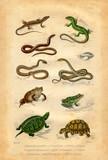 Histoire naturelle : reptiles et amphibiens