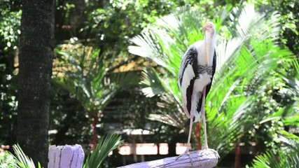 Painted stork on the branch