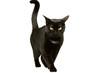 canvas print picture - Katze läuft 1