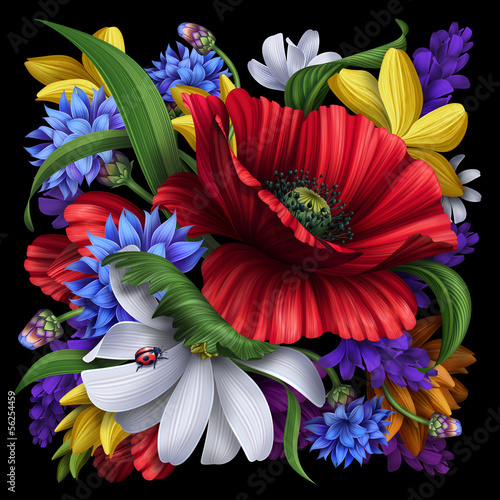cornflower, poppy, daisy rural flowers illustration