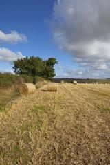 harvest scenery