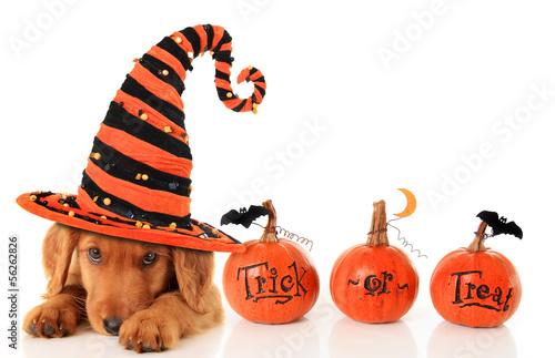 Papiers peints Chien Halloween puppy