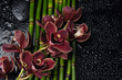 Branch red orchid with stones and thin bamboo grove