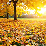 Fototapety Colorful sunlighted autumn park