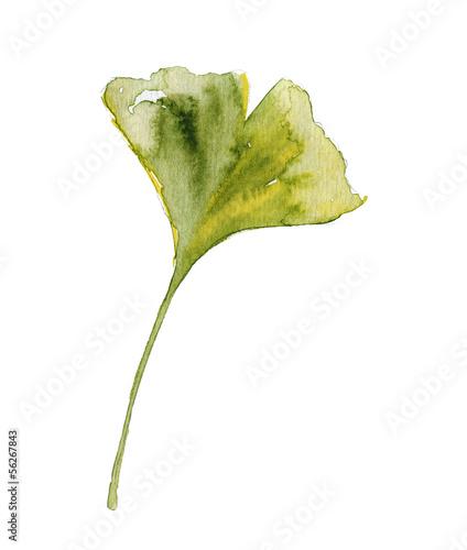 Ginkgo Leaf © Heidrun Gellrich