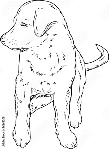 Vector of sitting dog on white background, sketch
