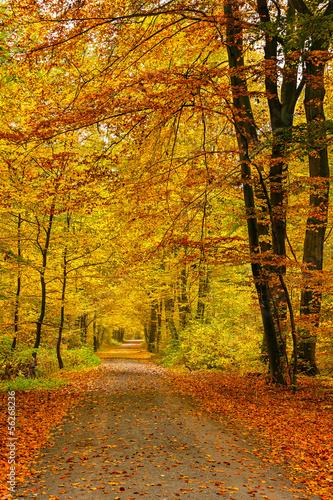 Keuken foto achterwand Bossen Autumn forest