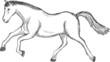Vector scetch of a horse jump young stallion running
