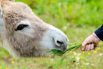 the boy and the donkey