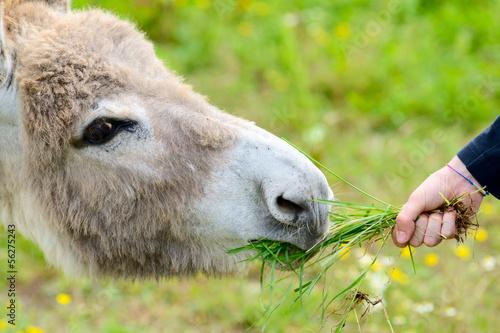 Aluminium Ezel the boy and the donkey