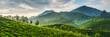 Tea plantations - 56278400