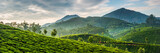 Fototapety Tea plantations