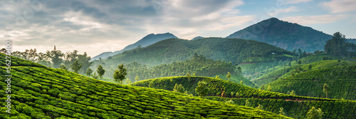 Poster Koffie Tea plantations