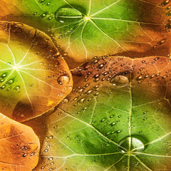 background from dewy leaves