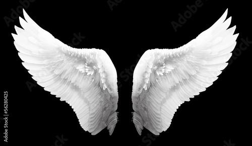 Wing - 56280425