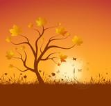 Baum Laub Herbst Sonne
