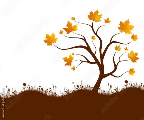 Herbst Baum Wiese