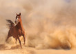 Arabian horse running out of the Desert Storm - 56287069