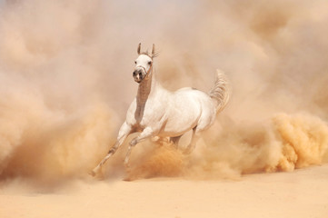 Arabian horse running out of the Desert Storm