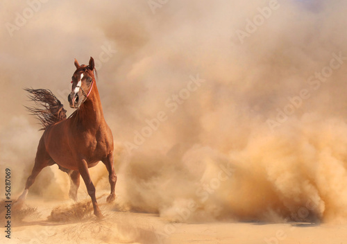 Spoed canvasdoek 2cm dik Zandwoestijn Arabian horse running out of the Desert Storm