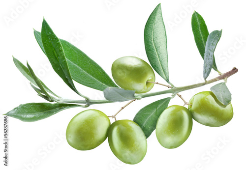 Branch of olive tree with green olives on it.