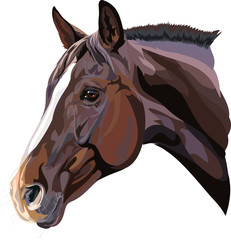 vector drawing of a horse's head