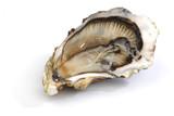 Fototapety Oyster on white