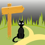 Black cat and wooden arrow on the road