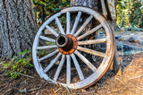 Wagon wheel leans against pine tree