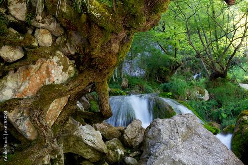 Roccia con radici di albero